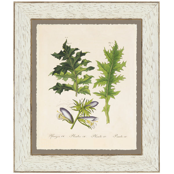 Acanthus Botanical Print by Bertuch, 1790