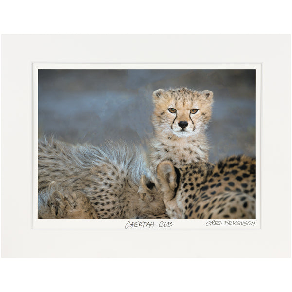 """Cheetah Cub"" by Greg Ferguson"