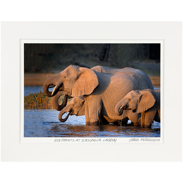 """Elephants at Zibilanja Lagoon"" by Greg Ferguson"