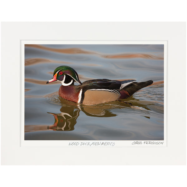 """Wood Duck, New Mexico""  by Greg Ferguson"