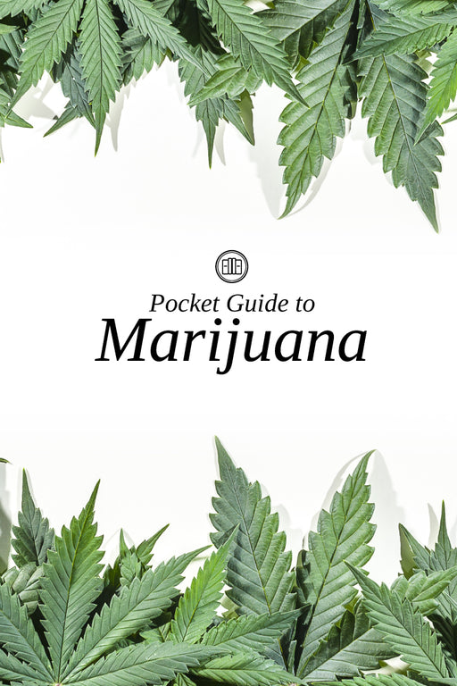 Pocket Guide to Marijuana