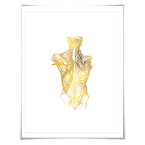 Human Body Anatomical Gold Foil Art Print. 7 Foil Colours/3 Sizes. Medical Art Print, Science Poster.