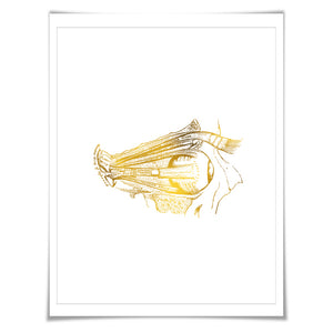 Human Eye Anatomical Gold Foil Art Print. 7 Foil Colours/3 Sizes. Medical Art Print, Science Poster.