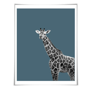 Giraffe Art Print. 6 Sizes/60 Colours. Giraffe Photo. Nursery Wall Art. Wildlife Poster. Safari Animal Art