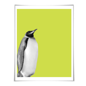 Penguin Art Print. 6 Sizes/60 Colours. Penguin Photo. Nursery Wall Art. Wildlife Poster. Animal Art