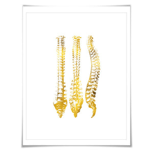 Human Spine Anatomical Gold Foil Art Print. 7 Foil Colours/3 Sizes. Medical Science Poster.