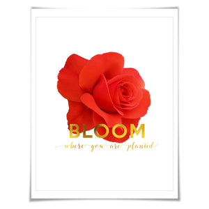 Bloom Where You Are Planted Gold Foil Art Print. 3 Sizes. Flower Poster. Floral Art. Red Rose. Inspirational Quote.