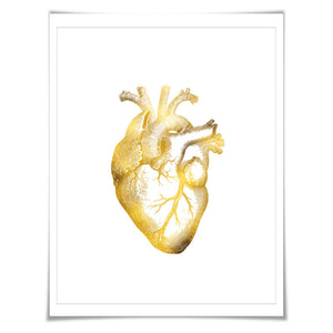 Human Heart Anatomical Gold Foil Art Print. 7 Foil Colours/3 Sizes. Science Poster. Anatomy Wall Art. Medical Poster