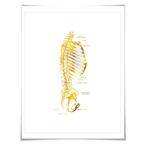 Human Spine Anatomical Gold Foil Art Print. 7 Foil Colours/3 Sizes. Medical, Science Poster.