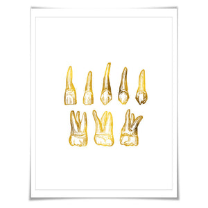Human Teeth Gold Foil Print. 7 Foil Colours/3 Sizes. Dentist Dental Office Tooth Wall Art. Anatomy Poster.