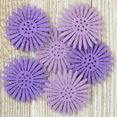 Daisy Flowers Purple