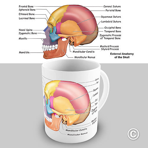 Skull Anatomy Novelty Mug