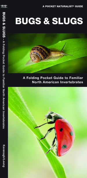 Bugs & Slugs: A Folding Pocket Guide to Familiar North American Invertebrates (Pocket Naturalist Guides