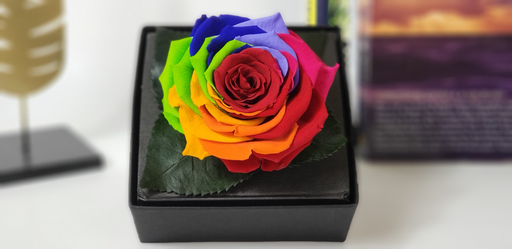 Preserved Rainbow Rose - KIKA DECO