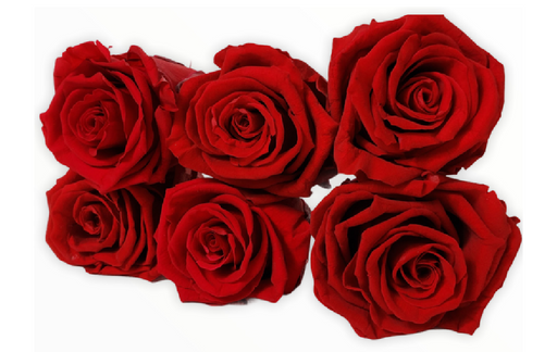 6 Pack Preserved Roses - KIKA DECO