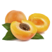 Apricot Essential Oil