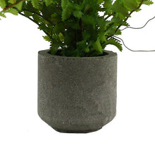 Nephrolepis Fern in Cement Pot