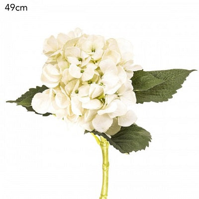 Hydrangea Short Stem Cream
