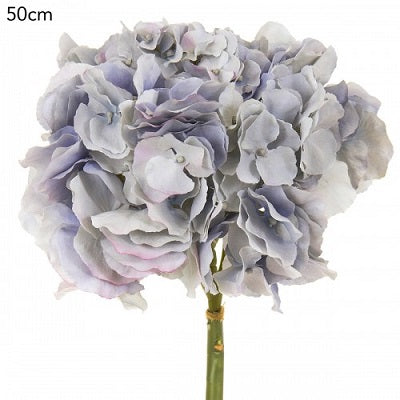 Hydrangea Mophead Light Blue