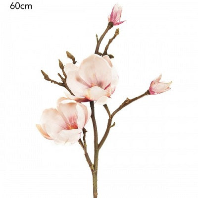 Magnolia Tree Branch Pink