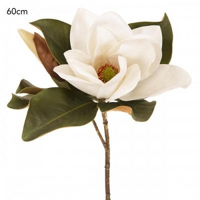 Magnolia Flower White