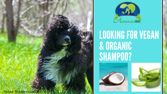 Groomer are you looking for  organic & sustainable shampoo ?