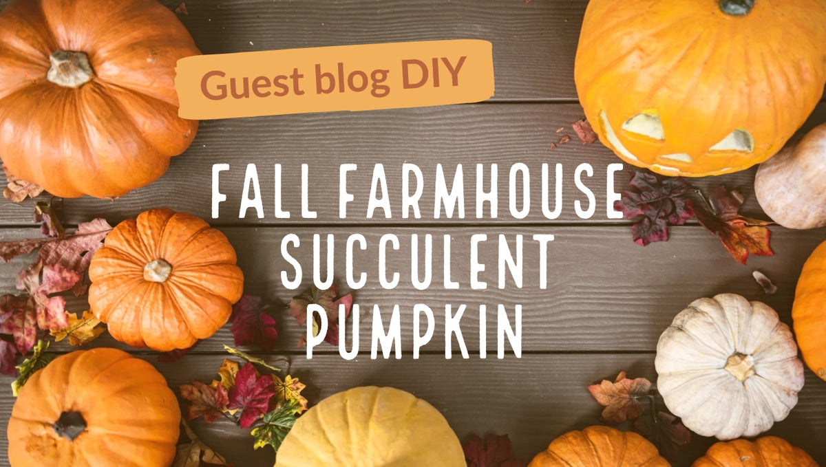 Fall Farmhouse DIY: Succulent Pumpkin
