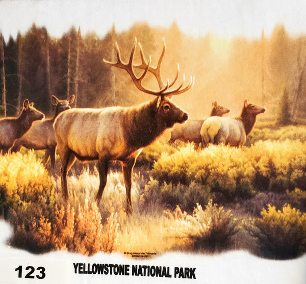 #123 Morning Glory Elk