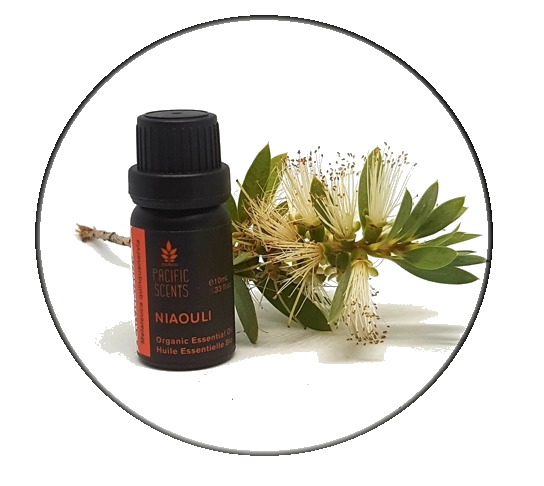 Niaouli Essential Oil 10ml - Pacific Scents