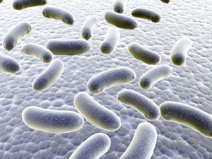 Your gut bacteria plays a big part in your immune health.