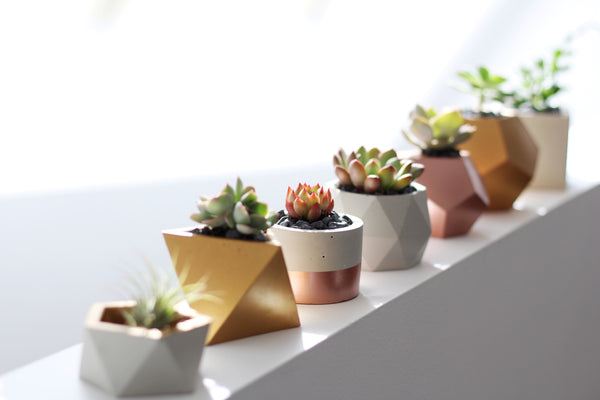 Geometric Concrete Planter with Plants