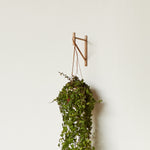 single wooden shelf bracket used as plant hanger