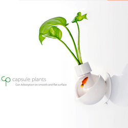 Cute Capsule Plants (Wall or Table Top Mounted)