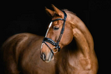 PS of Sweden Flying Change Deluxe Bridle **pre-order**