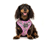 "BIG AND LITTLE DOGS REVERSIBLE HARNESS - ""ONE OF A KIND"""