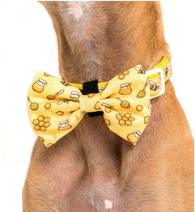BIG AND LITTLE DOGS DOG COLLAR AND BOW TIE-