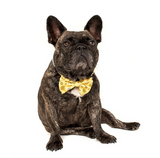 "BIG AND LITTLE DOGS DOG COLLAR AND BOW TIE- ""BEE-HIVING"""