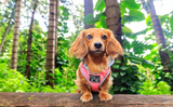 Big and Little Dogs Hoodie Harness