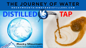 Distilled Water vs Tap Water