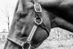 American Pharoah Black and White - Matted Prints