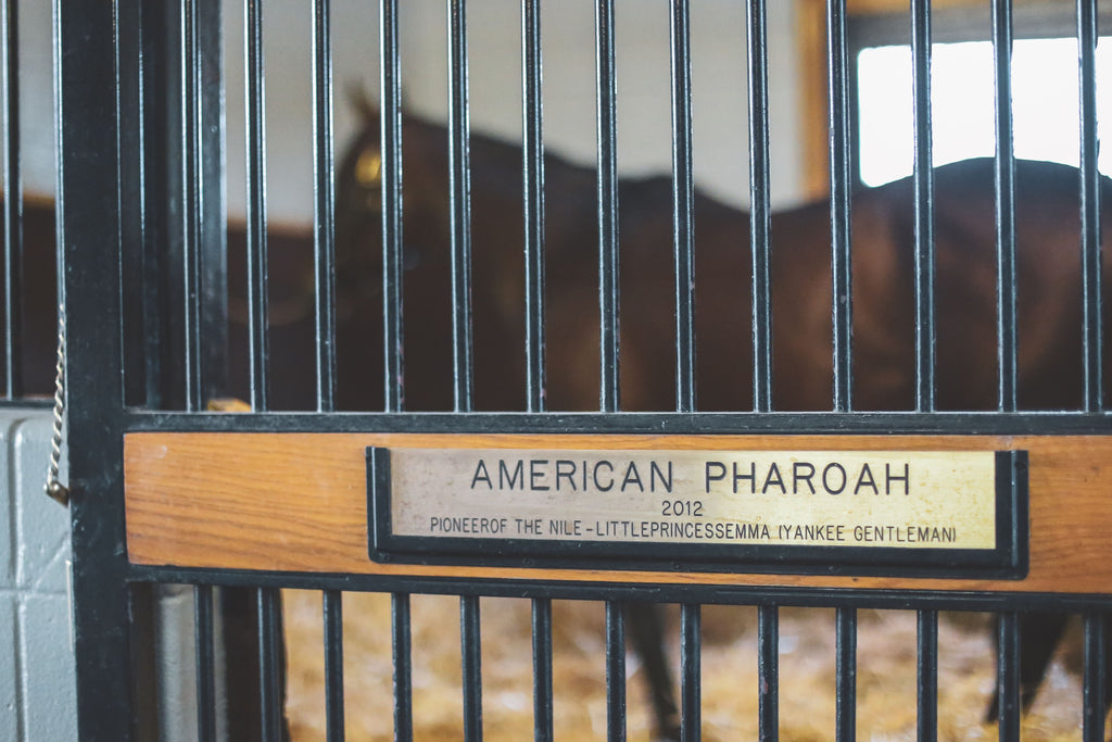 American Pharoah Name Plate - Matted Prints