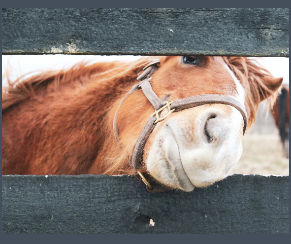 KY Equine Adoption Center Get Closer - Matted Prints