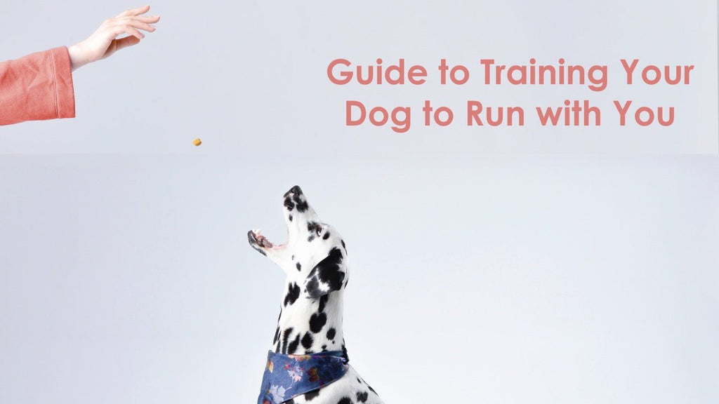 Guide for Training Your Dog to Run with You