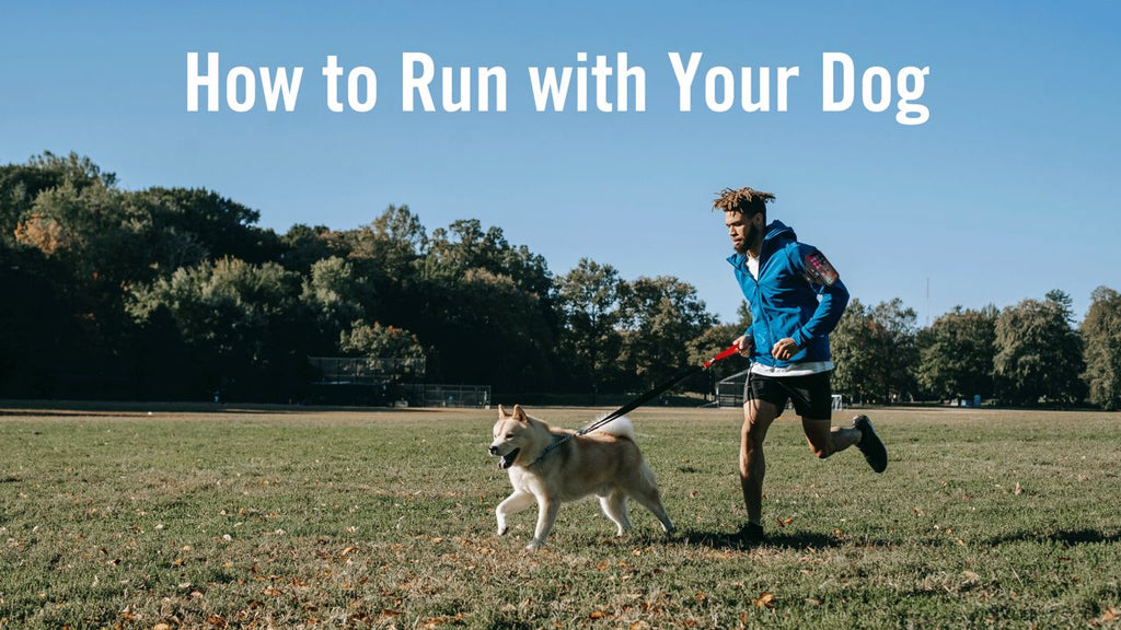 Running Motivation: How to Run with Your Dog!