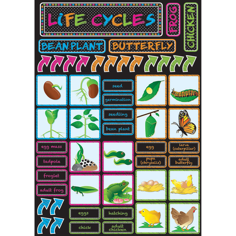 Life Cycles Magnetic Mini Bbs
