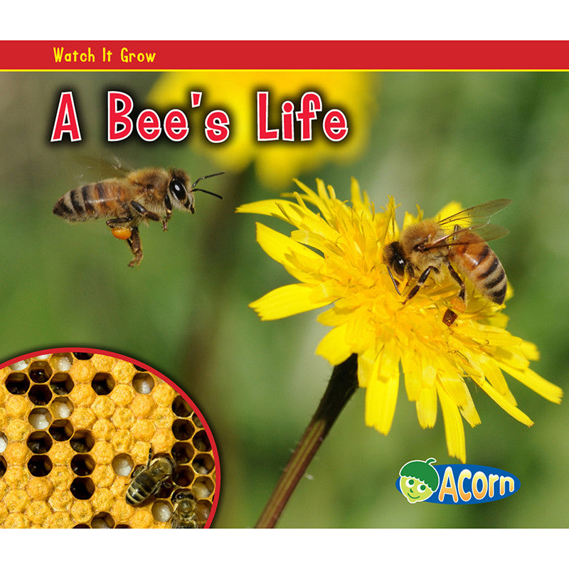 A Bees Life