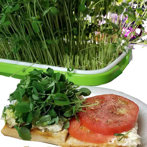 green peashoots garnishing avocado tomato sandwich