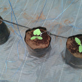 5 gal Coco Coir Open Top Grow Bags 6 pack