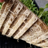 Root Penetration for Jute Microgreen Seed Pads