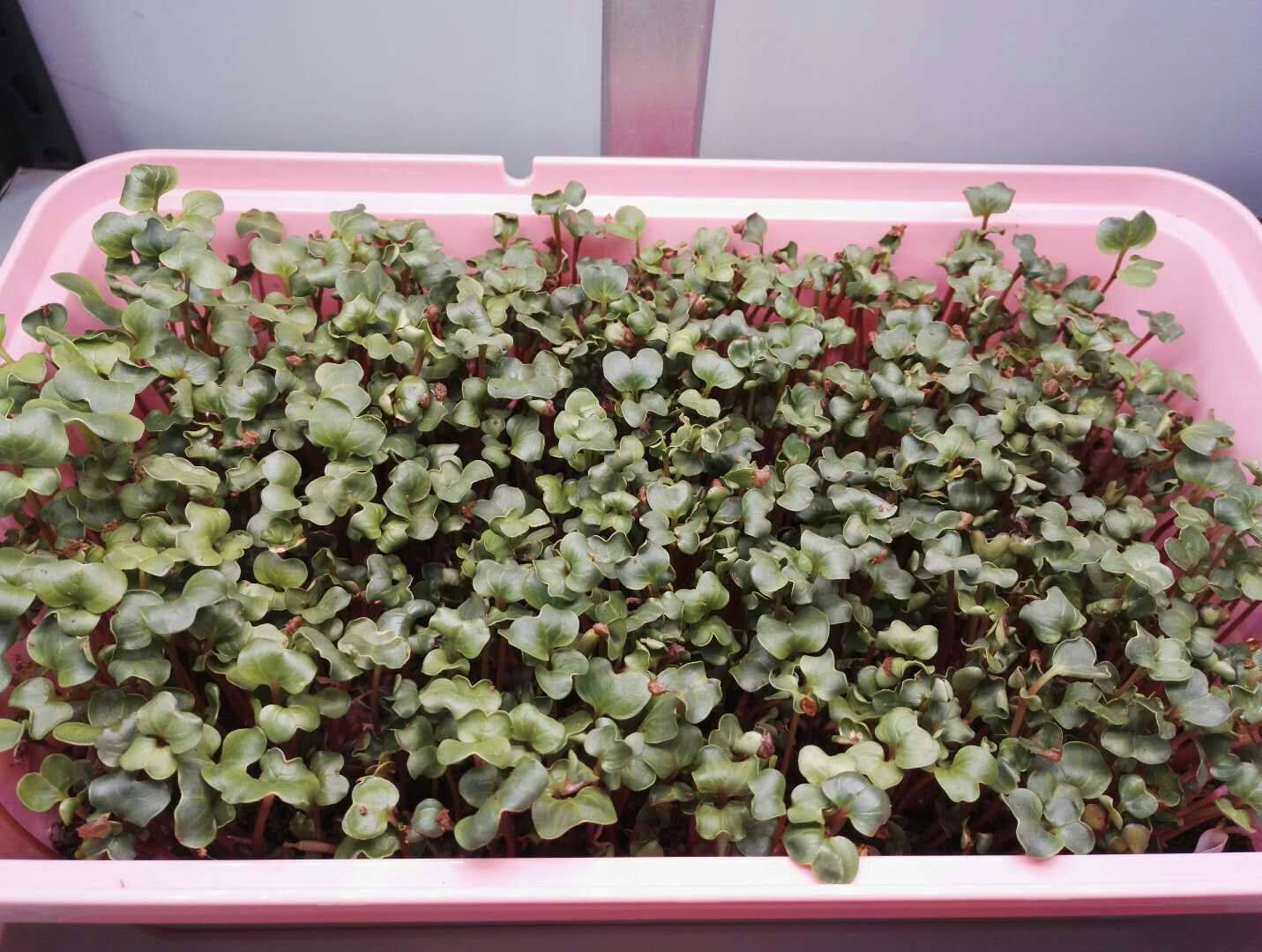 Self Contained Hydroponic Tabletop Farm | HydroPro Sales Inc